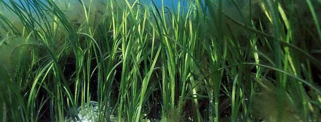 Le alghe possono salvare la terra